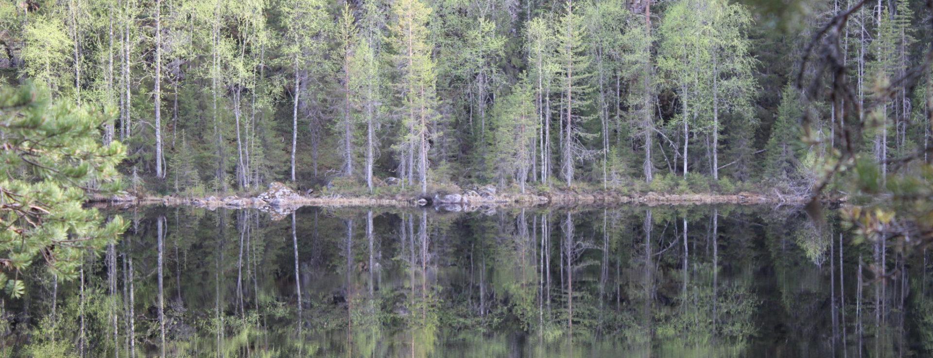 Metsään meni